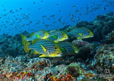 Malediven_703