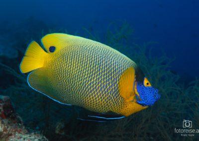 Malediven_769