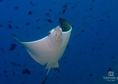 Malediven, Indischer Ozean, Asien