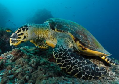 Malediven_762